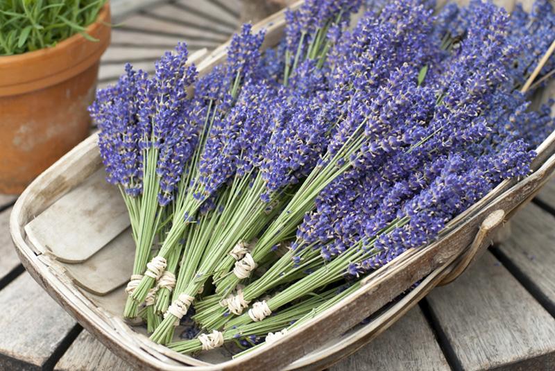 Lavender posies