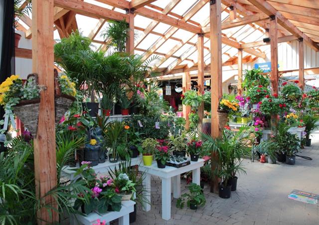 Centre_Jardin_Rossignol_Plantes_Pots
